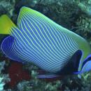 Подводный мир (DIVING)