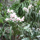 Орхидариум Ботанического сада