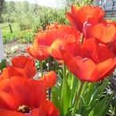 на тему весны