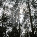 В лесу под Киевом 1