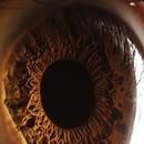 Эти прекрасные глаза