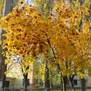 Осінь в Києві