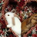 день святого валентина,подарки для любимых,мода2011
