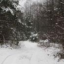 Зима на Житомирщине)