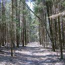 Андрушівка, ліс. Квітень 2012