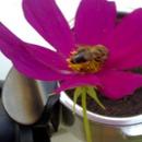 VELVAD. FLOWERS. 2