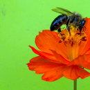 VELVAD. FLOWERS. 5