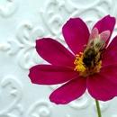 VELVAD. FLOWERS. 6