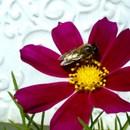 VELVAD. FLOWERS. 7