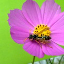 VELVAD. FLOWERS. 13