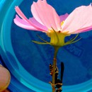 VELVAD. FLOWERS. 14