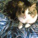 мой домашний тигр)